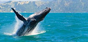 top 10 Alaska cruises